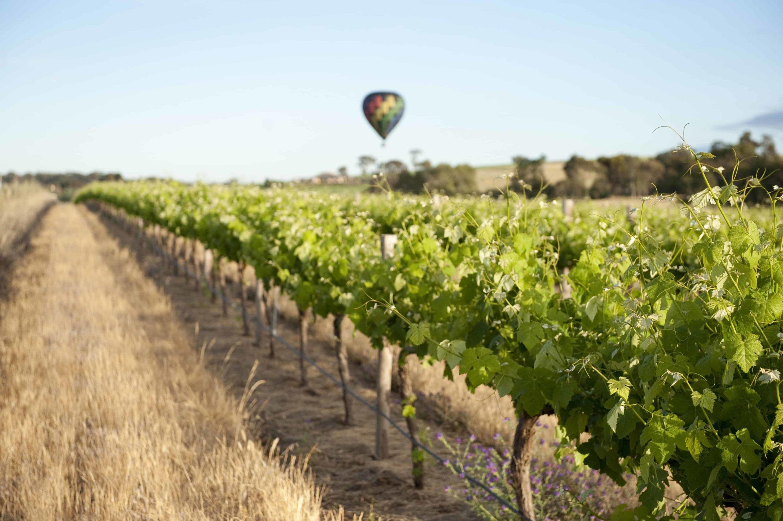 Adelaide And Barossa Valley