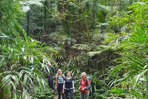 Gold-Coast-Hinterland-walk-Queensland-9
