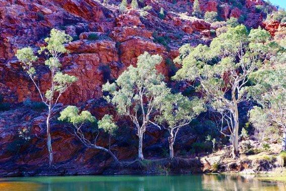 Larapinta-walk-Northern-Territory-9