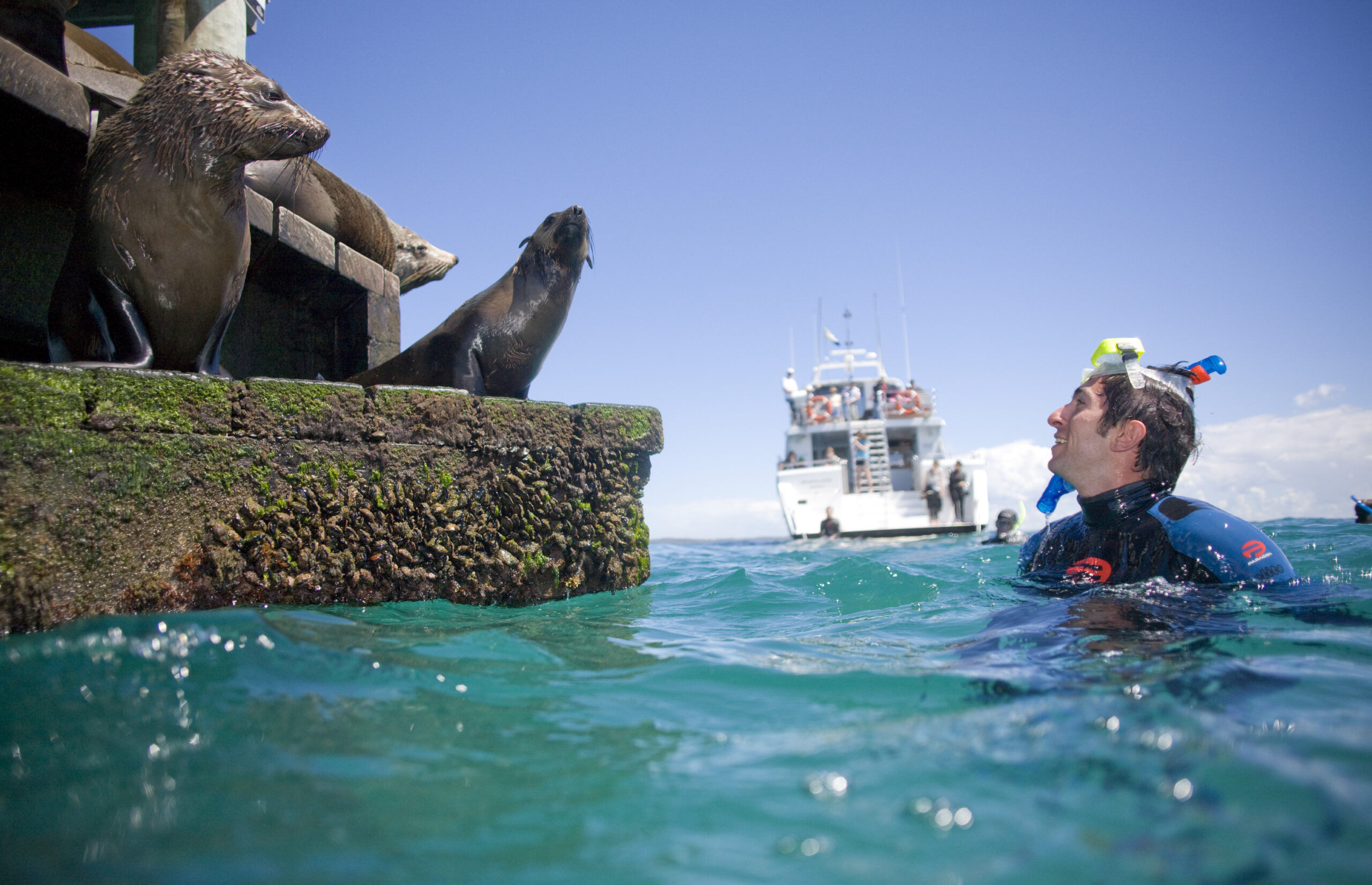 Small group Seal Swim – Private charter