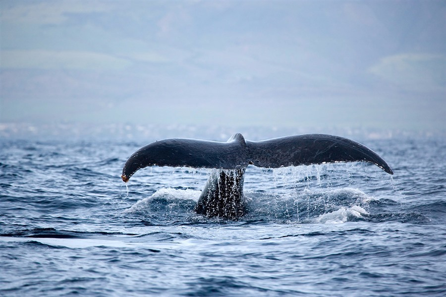 2-3 Hr Whale Watching Tour