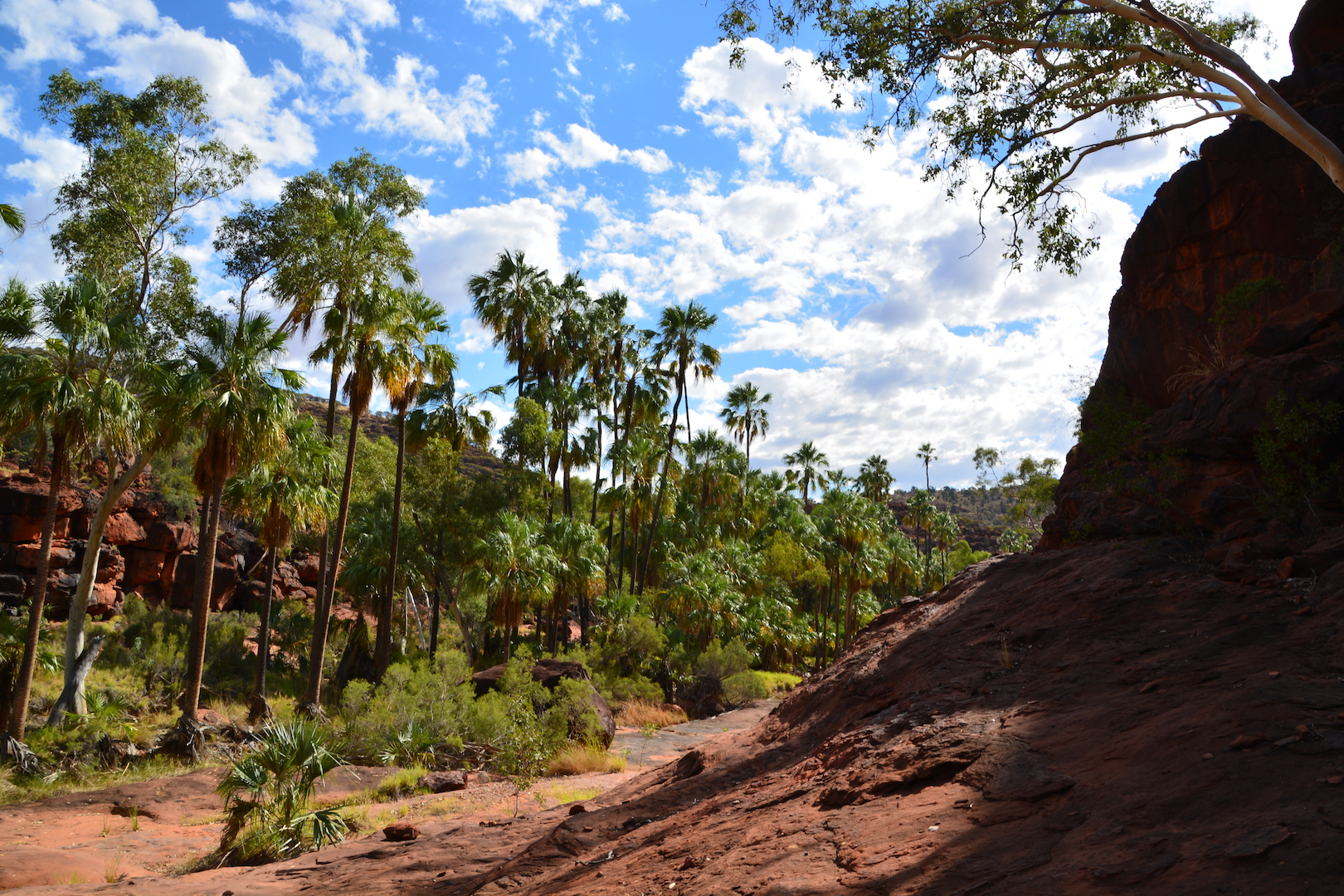 2 Day Palm Valley, Boggy Hole and Rainbow Valley 4WD Private Tour