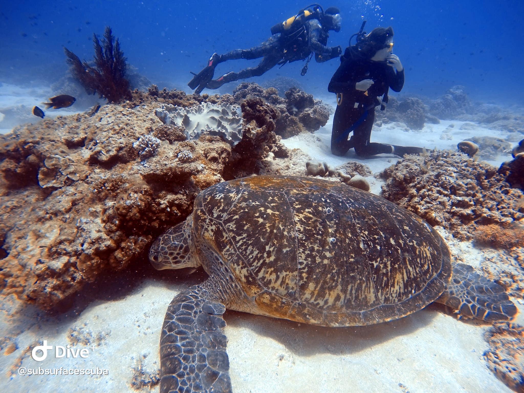 Scuba Diving Flinders Reef - Double Dive