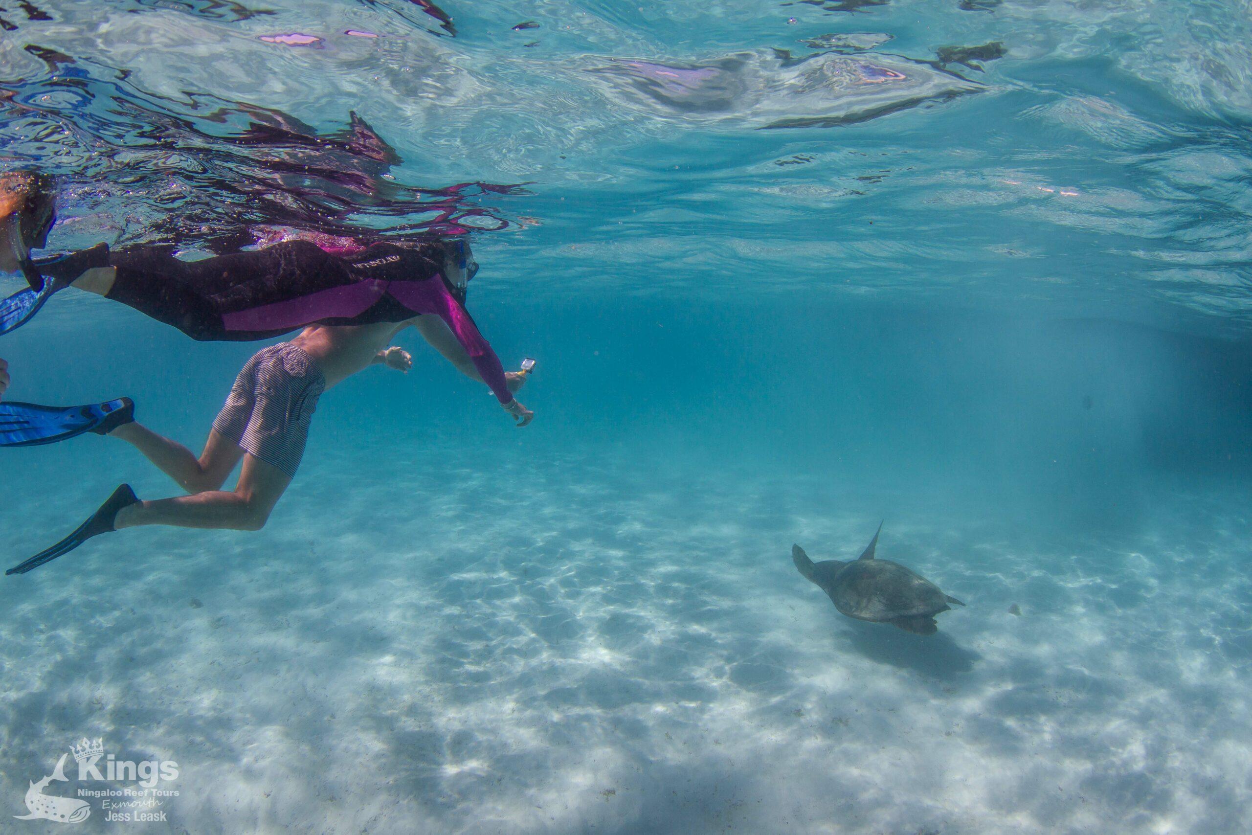 Whale Shark/Humpback/Eco Sea Life Tour (AUG-SEPT)