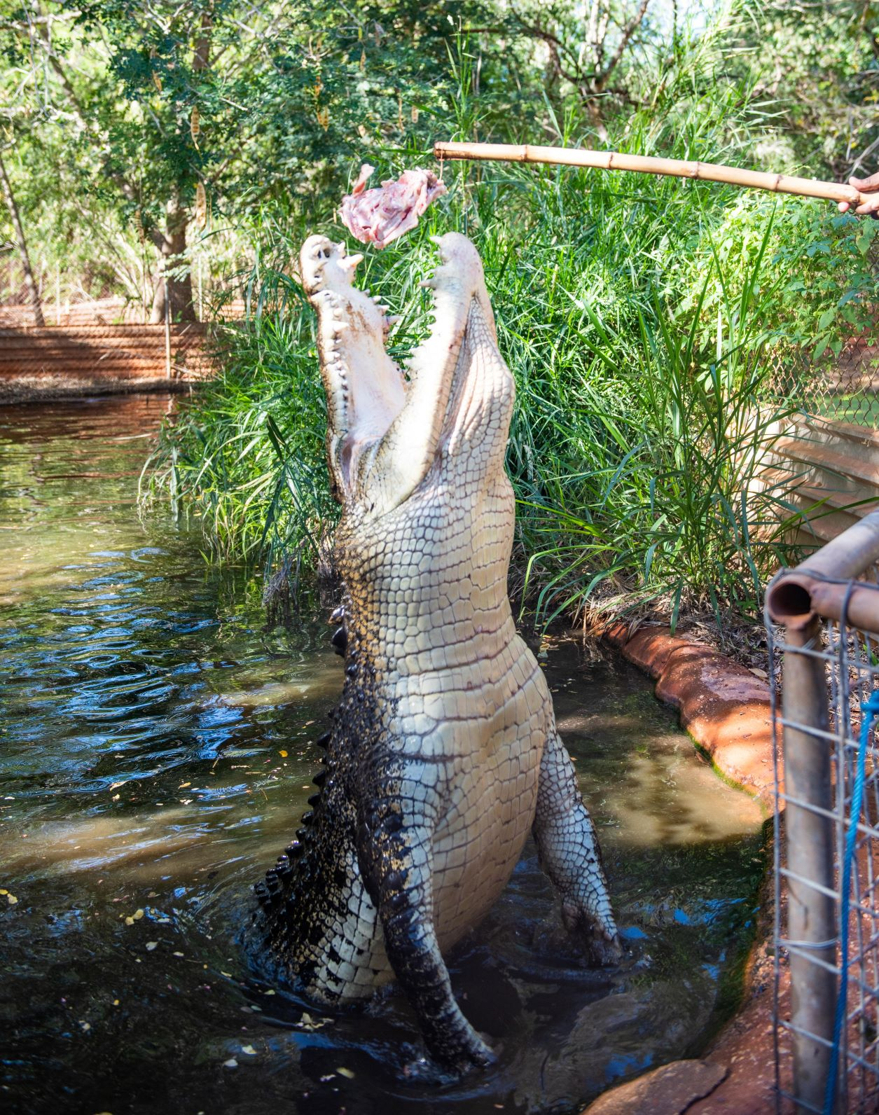 Malcolm Douglas Crocodile Feeding Tour - Entry Fees and Transport Included