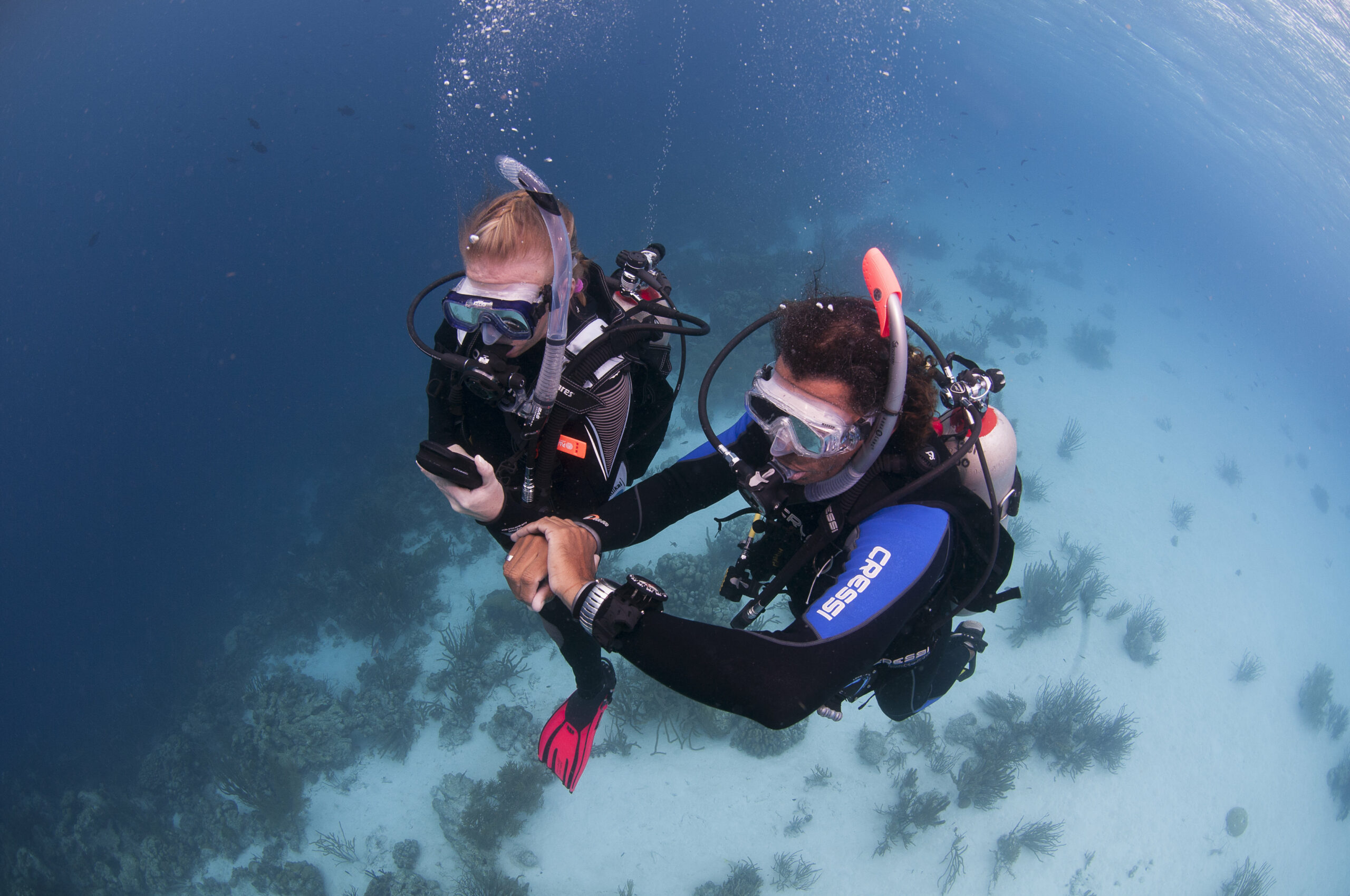Open Water Diver PADI Course - Gold Coast