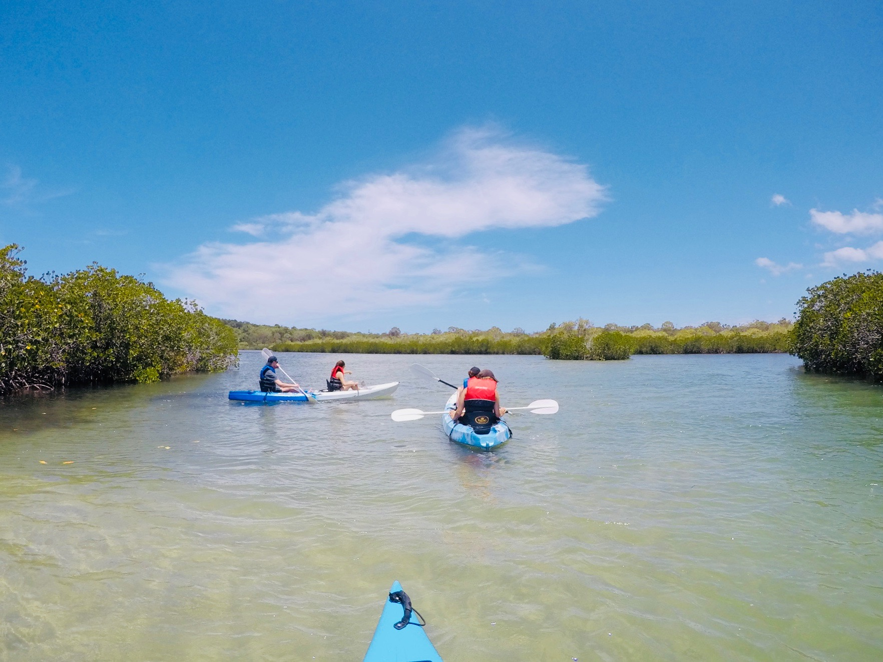 Kayaks & Stingrays: paddle hidden creeks and find our Rays