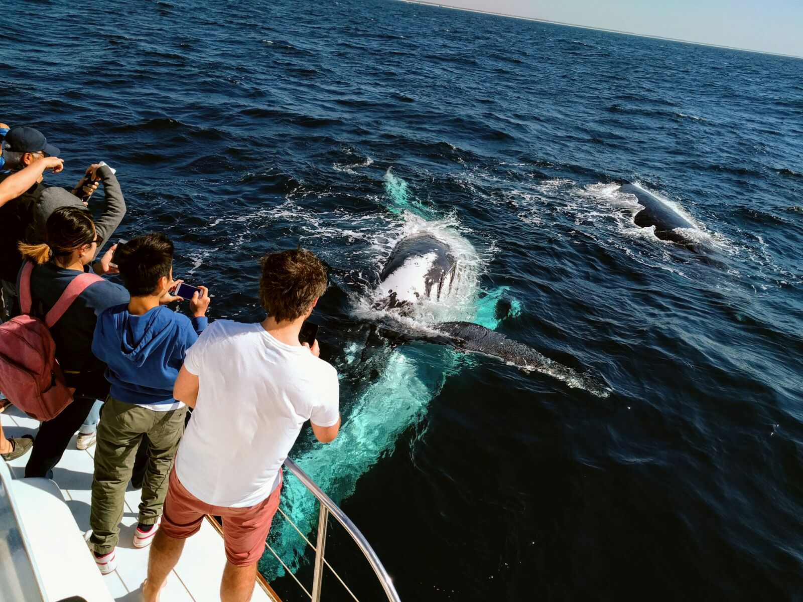 Whales in Paradise - Gold Coast