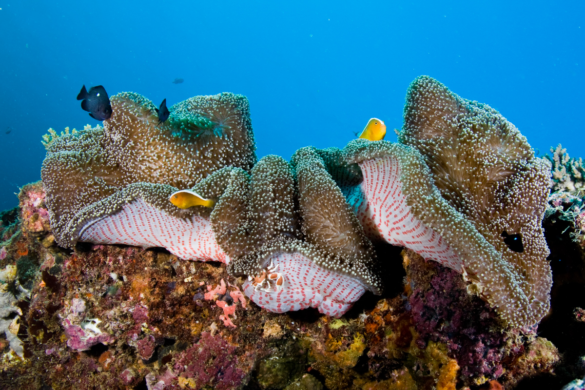 Outer Reef or Muiron Island Dive and Snorkel Tour
