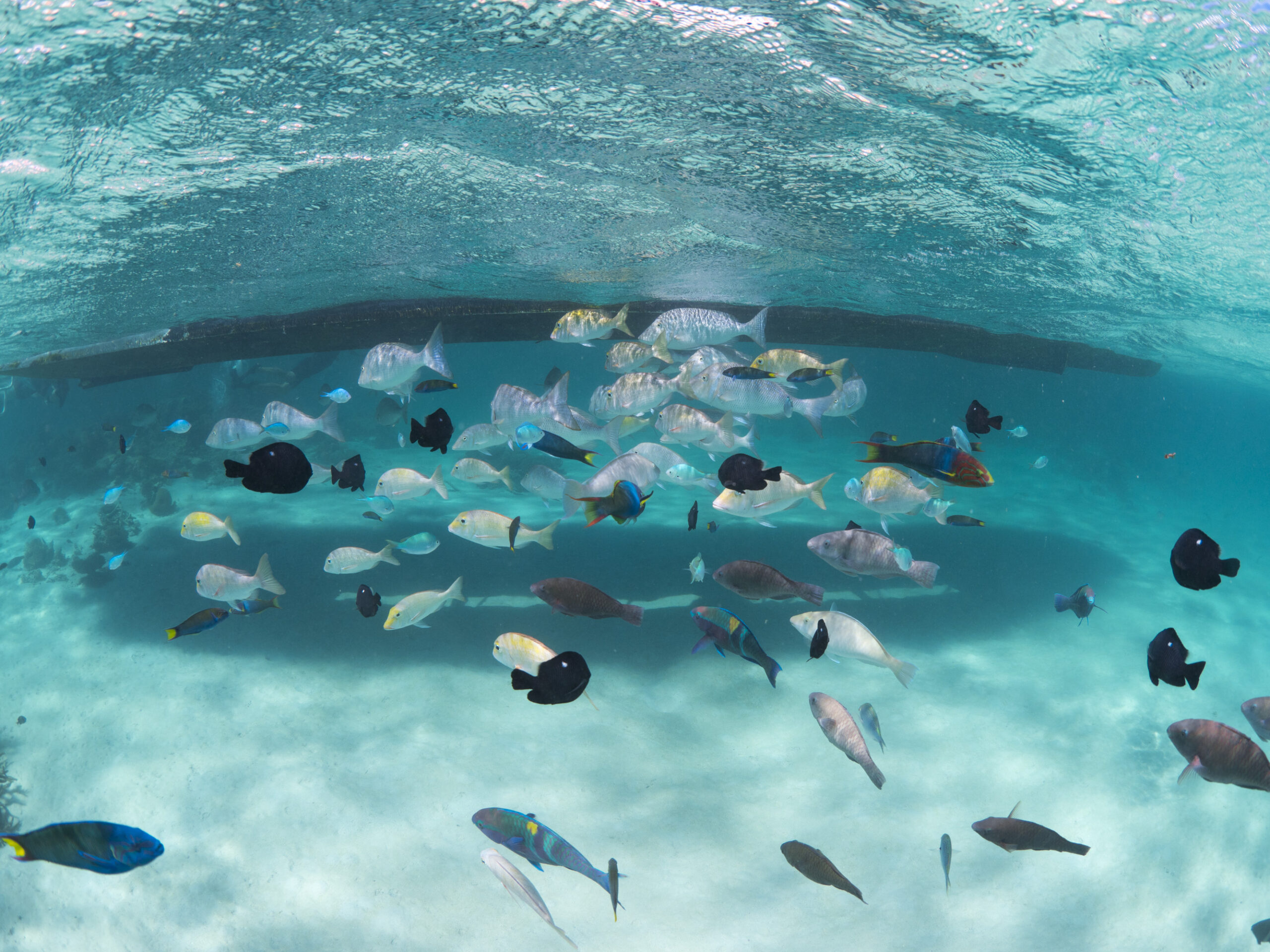 1 hour Coral Viewing Cruise