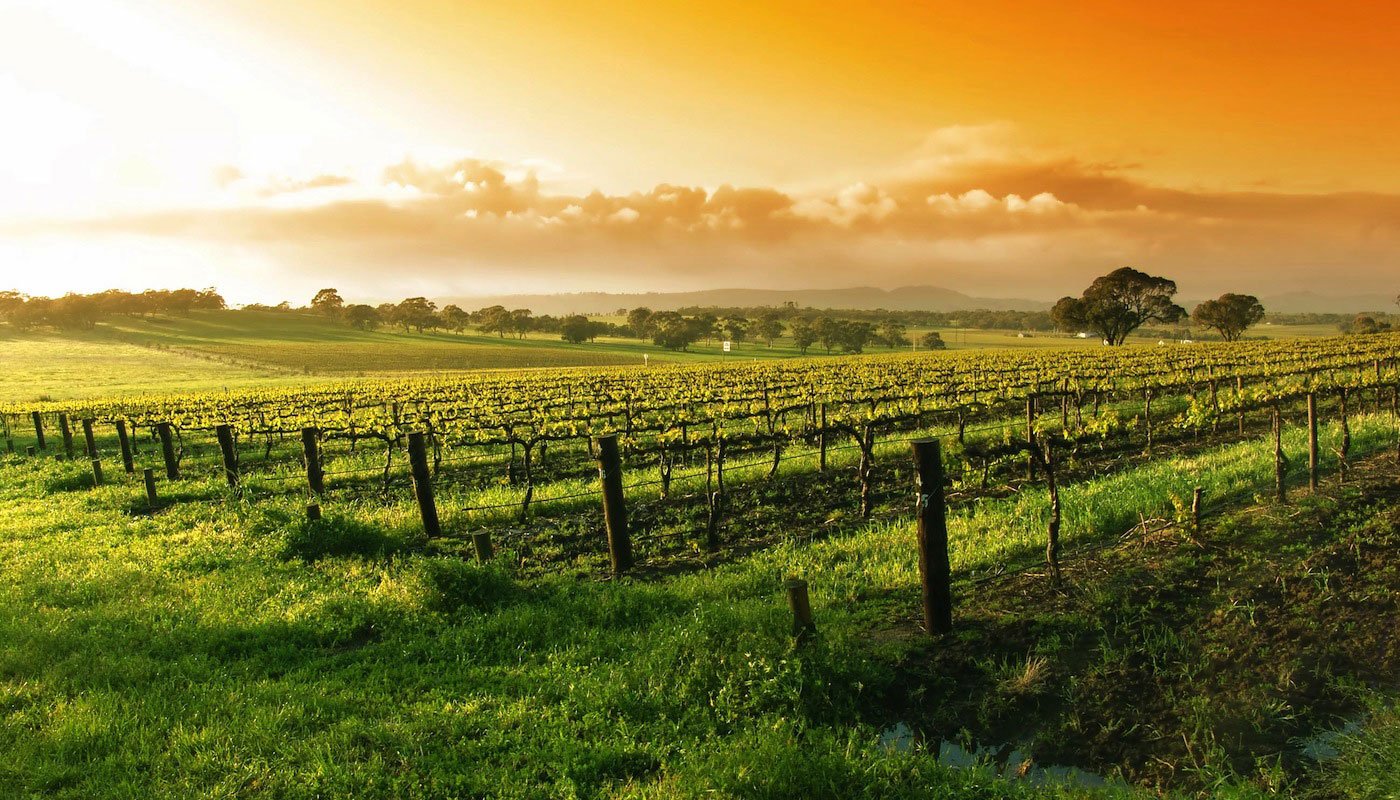 Great Tastes of Mudgee Wine Country (Full Day)
