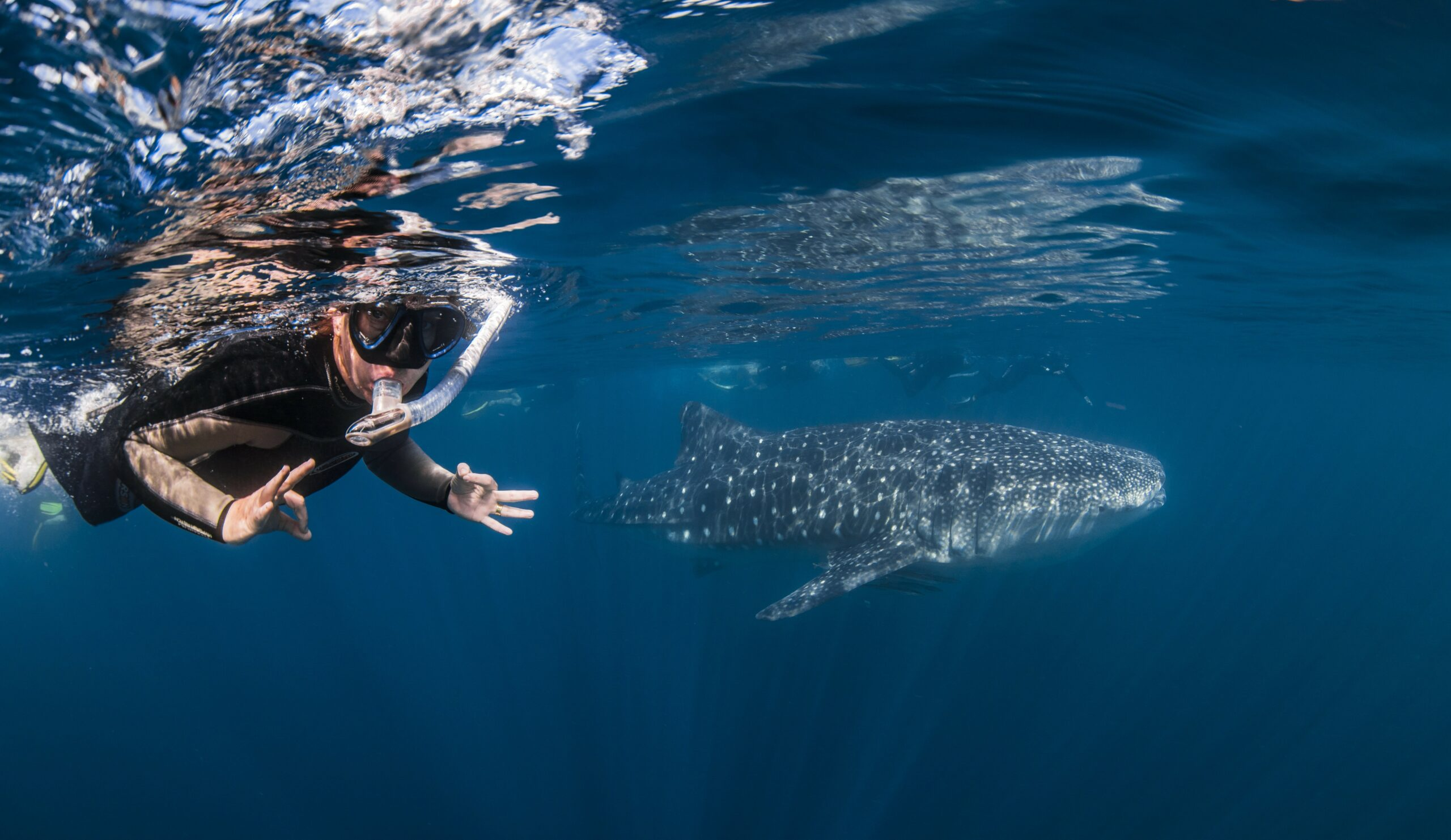 Deluxe Whaleshark Swim Tour aboard MV JAZZ 2            (1 of 2 Boats available).