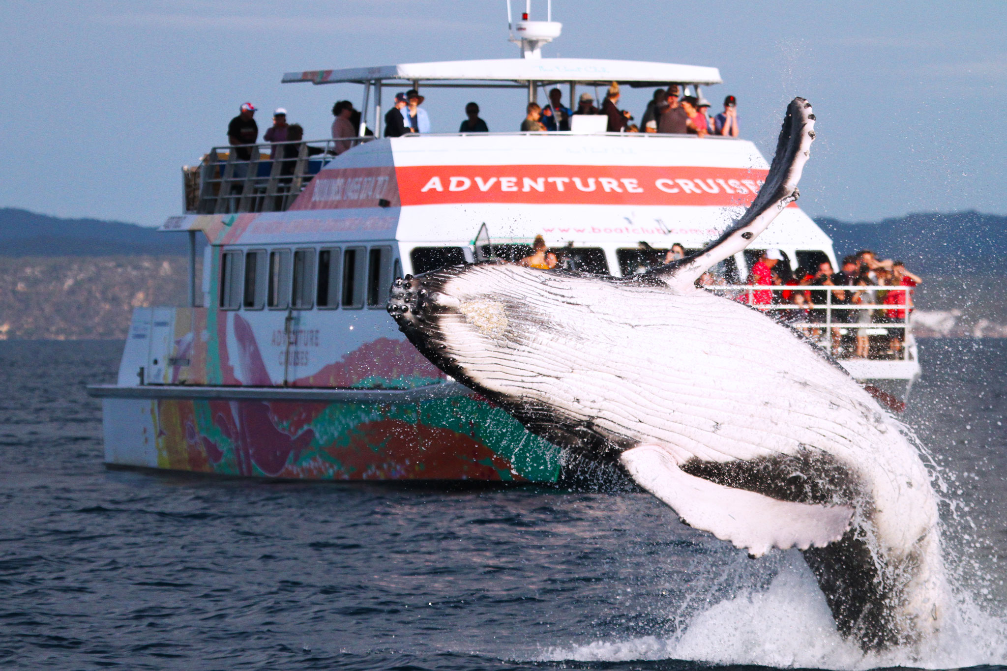Whale Watch half-day
