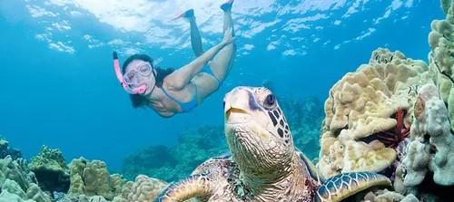 Wave Break Island Guided Snorkel Tour