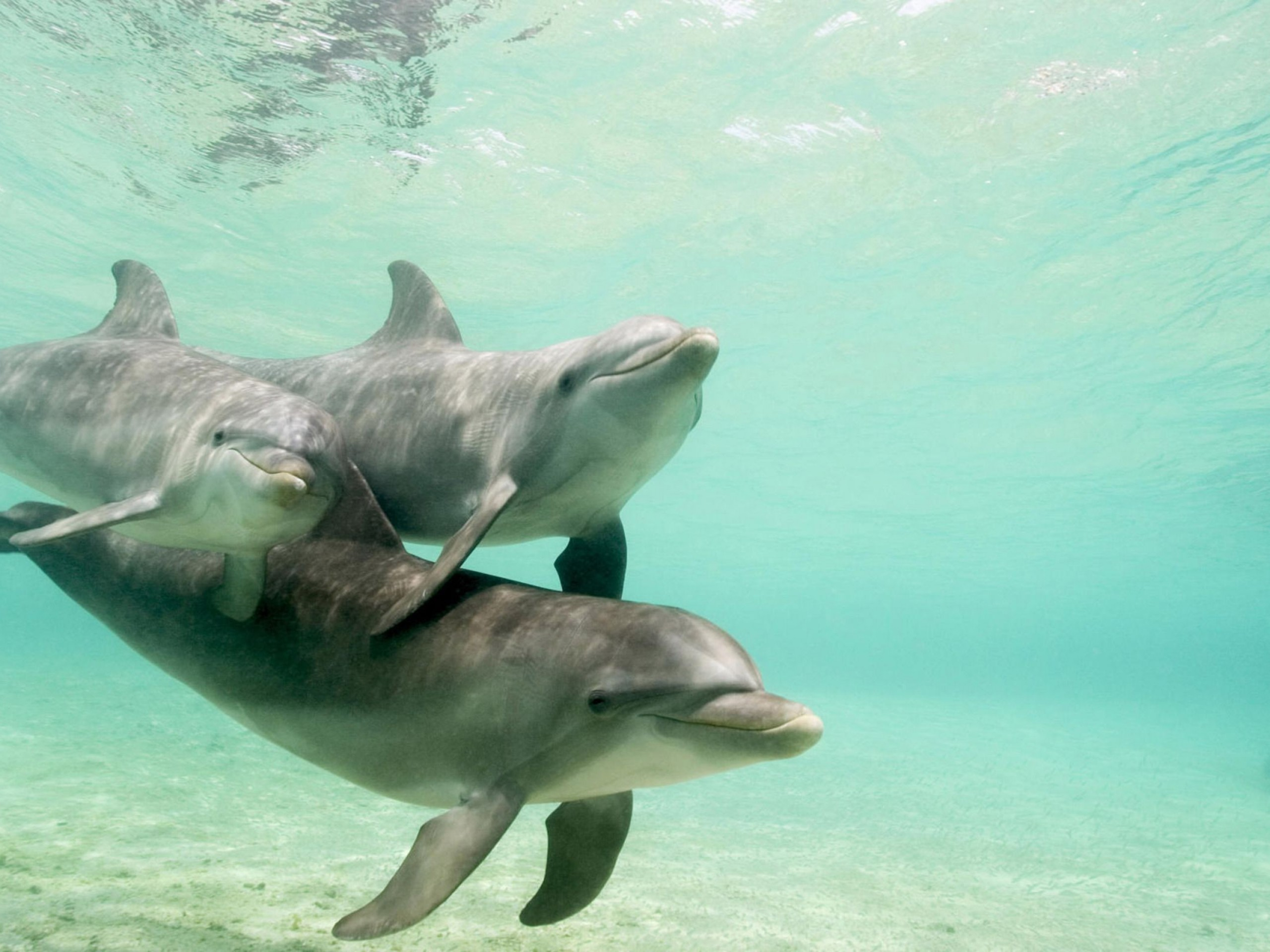 Small group Dolphin & Seal swim – Private charter
