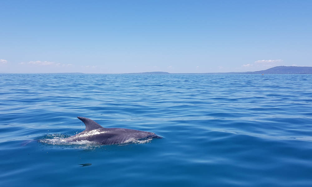 Dolphin and Seal Watching Eco Adventure Cruise
