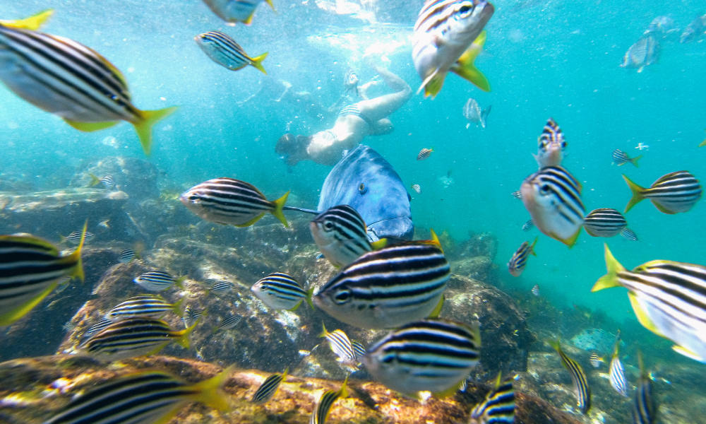 Manly Snorkel Walk and Talk Tour