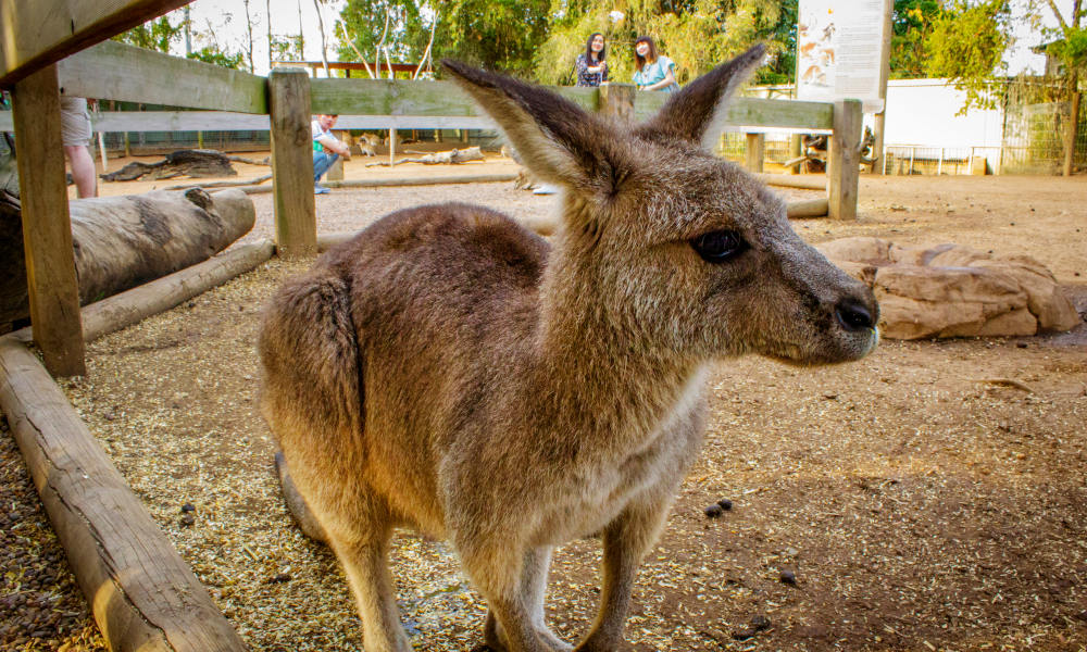 Blue Mountains and Wildlife Park Day Tour from Sydney