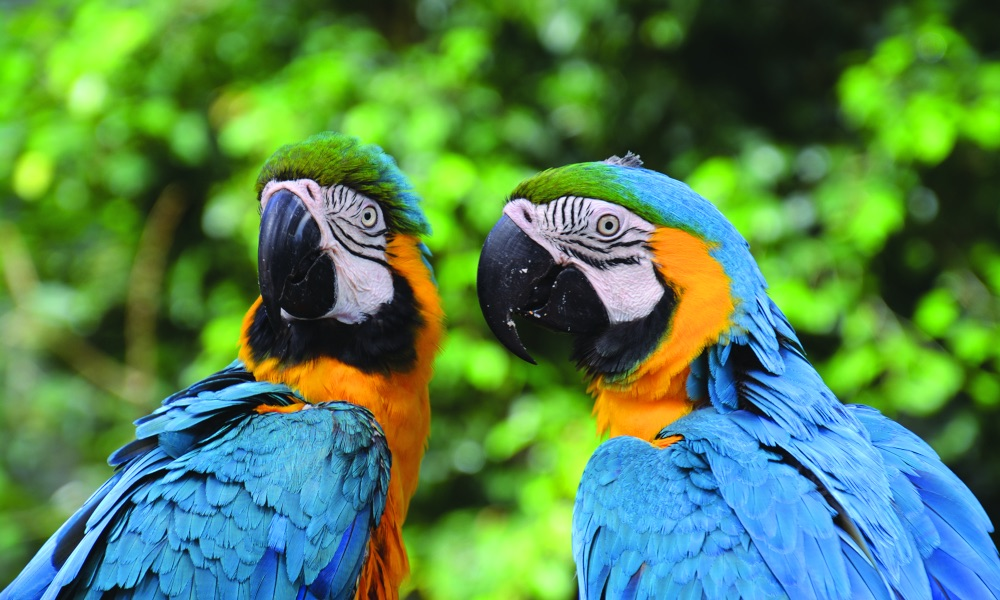 Birdworld Kuranda Entry Tickets