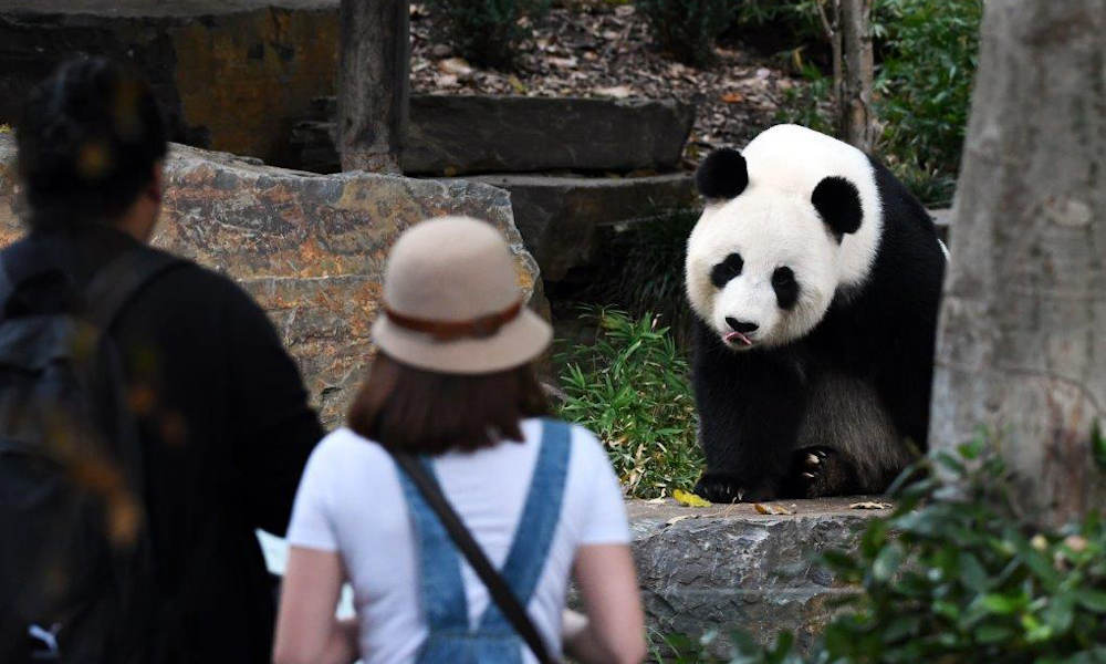 Adelaide Zoo General Admission Tickets