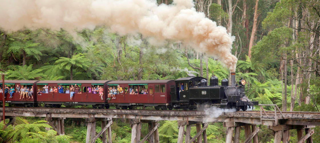 Puffing Billy Moonlit Sanctuary And Penguins Day Tour