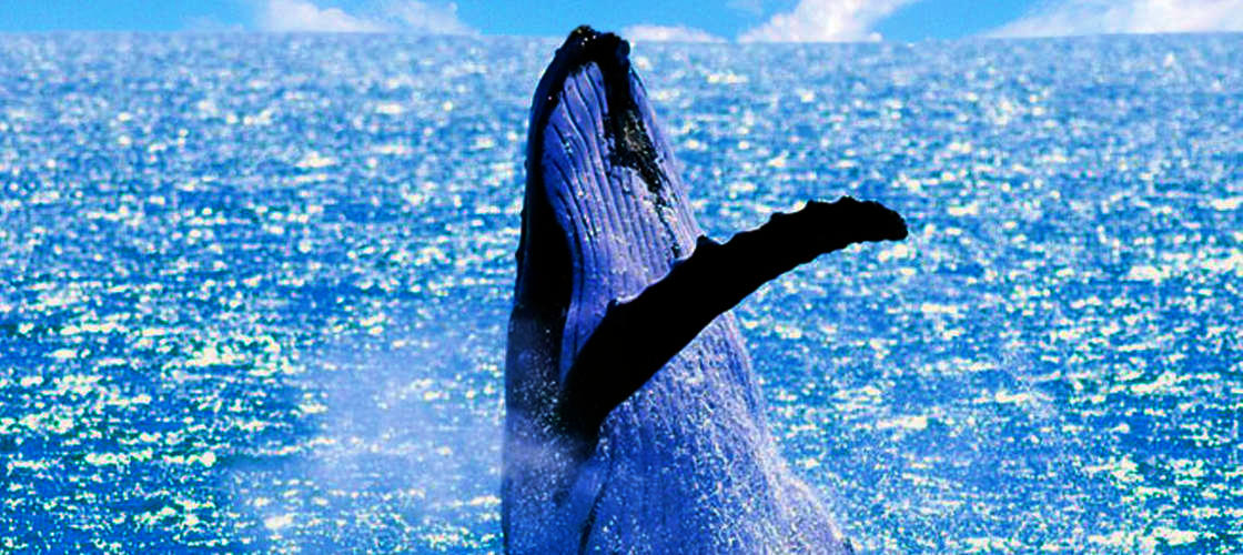 Small Group Whale Watching Tour from Mooloolaba