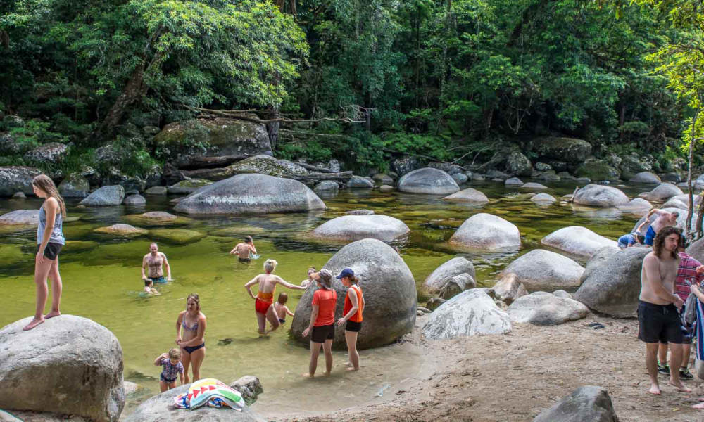 Cape Tribulation Day Tour with Daintree Wildlife Cruise