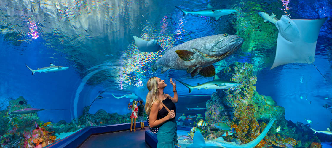 Cairns Aquarium Entry with 3 Course Dinner