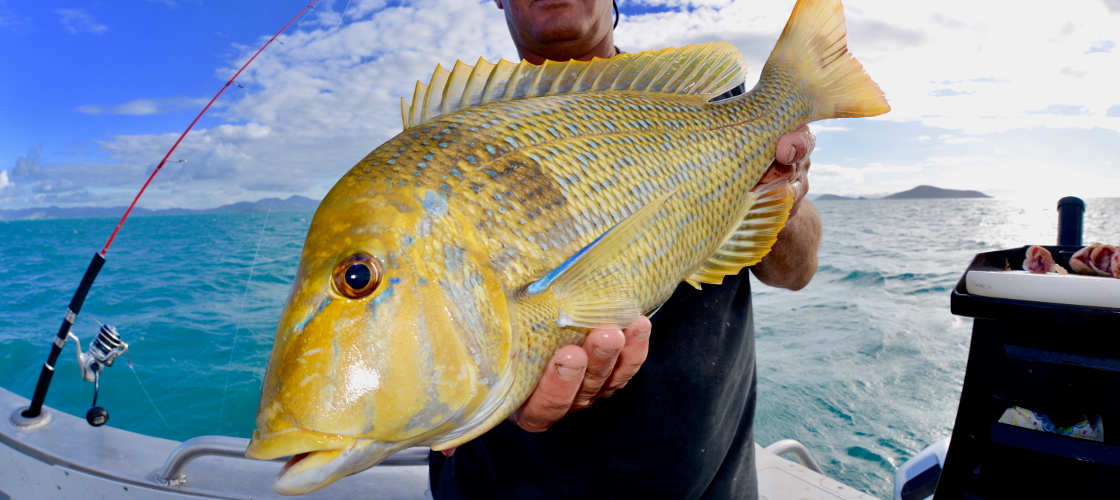 Airlie Beach Half Day Fishing Charter