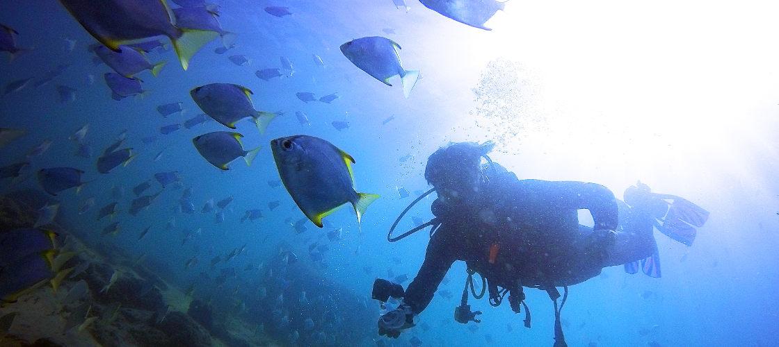 Gold Coast Introductory Scuba Dive Tour