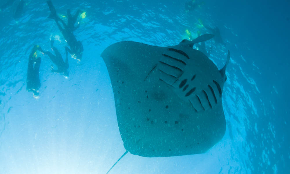 Muiron Islands Dive Tour from Exmouth