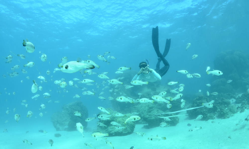 Outer Reef or Island Snorkel Tour from Exmouth