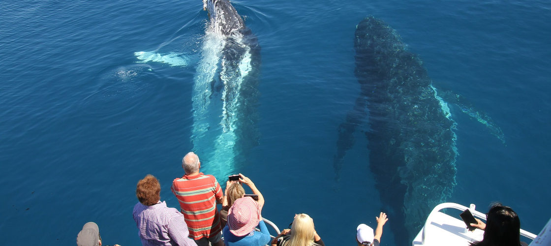 Hervey Bay Morning Whale Watch Cruise