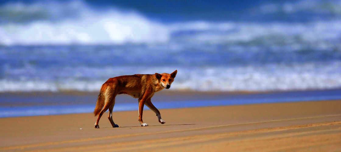 Fraser Island 1 Day Tour from Sunshine Coast