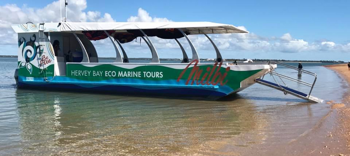 Turtle Discovery Eco Half Day Tour