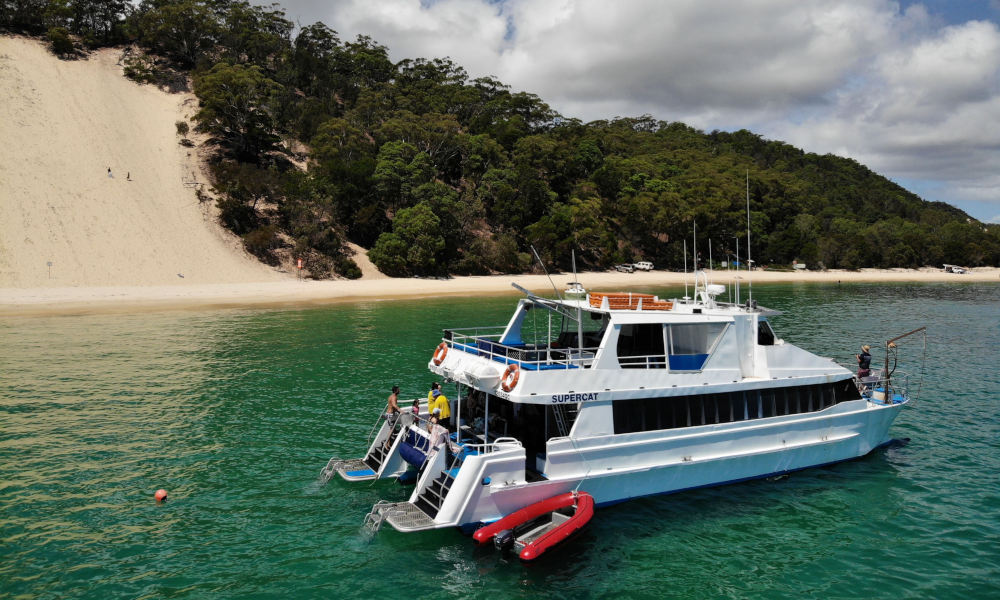 Moreton Island Dolphin Spotting and Snorkelling Cruise departing from Redcliffe