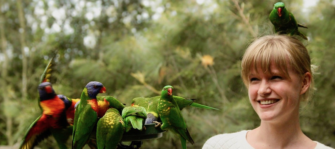 Lone Pine Koala Sanctuary Entry & Meal Packages
