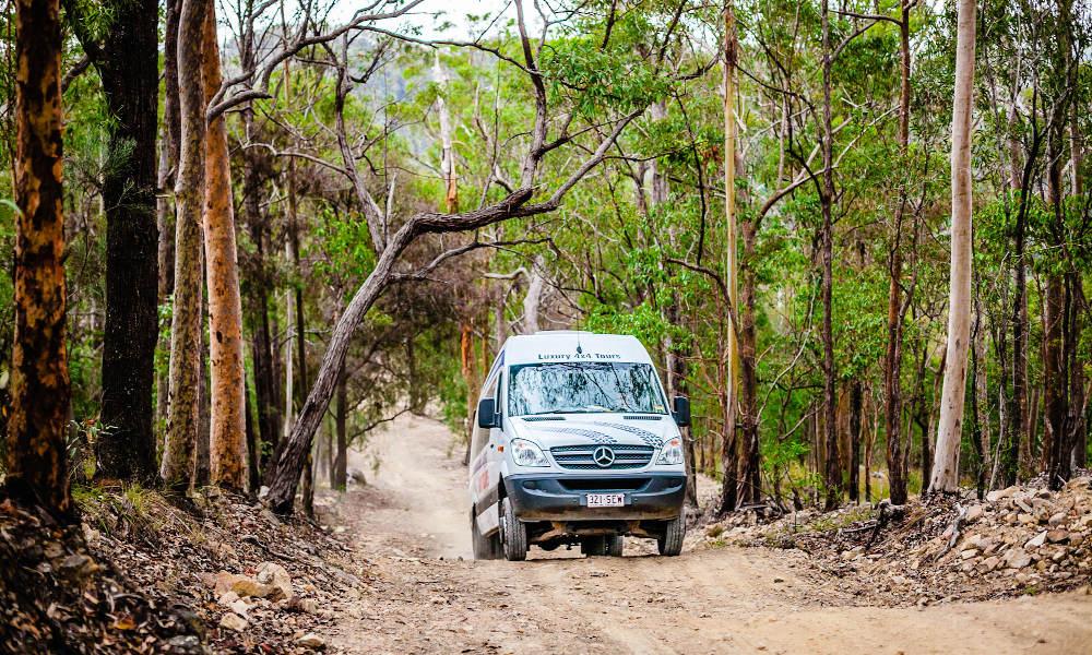 Natural Bridge Springbrook And Gold Coast Tour From Brisbane