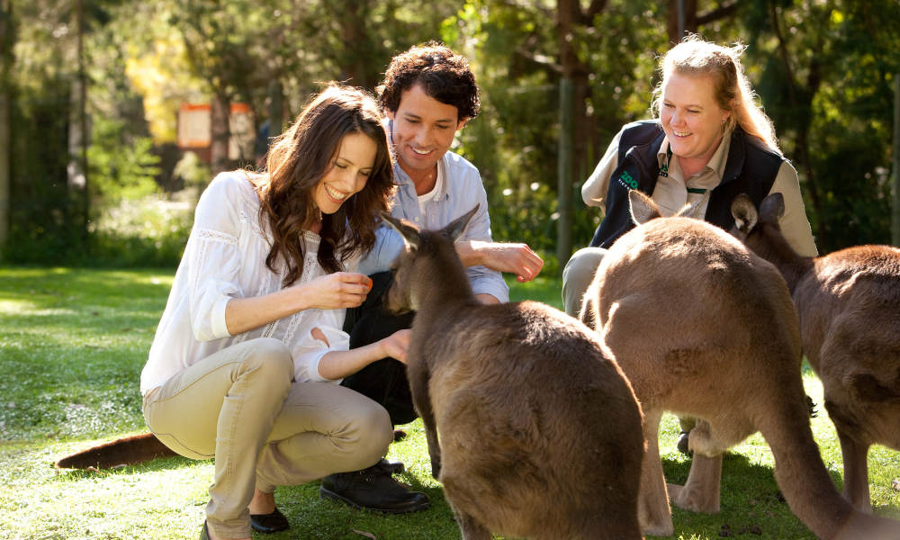 Puffing Billy and Healesville Wildlife Sanctuary Day Tour