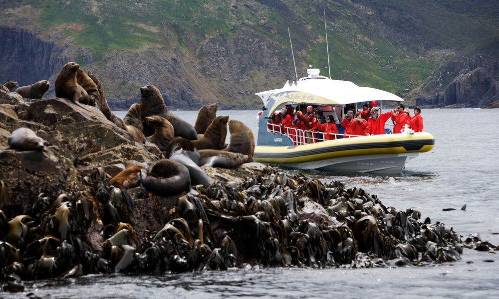 Bruny Island Wilderness Cruise and Bus Transfer from Hobart