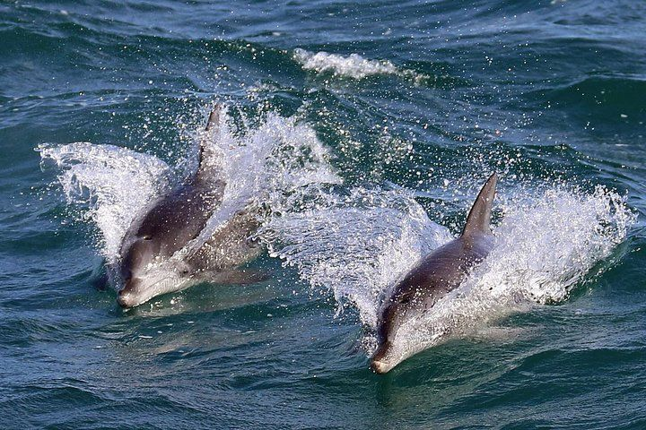 Jervis Bay Dolphin Watching Tour