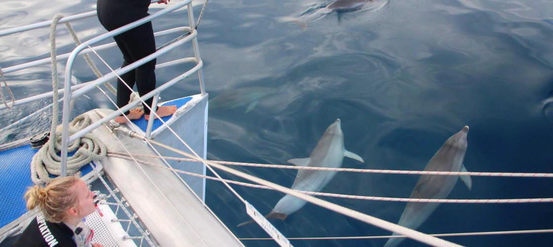 Adelaide Swim with Wild Dolphins Cruise