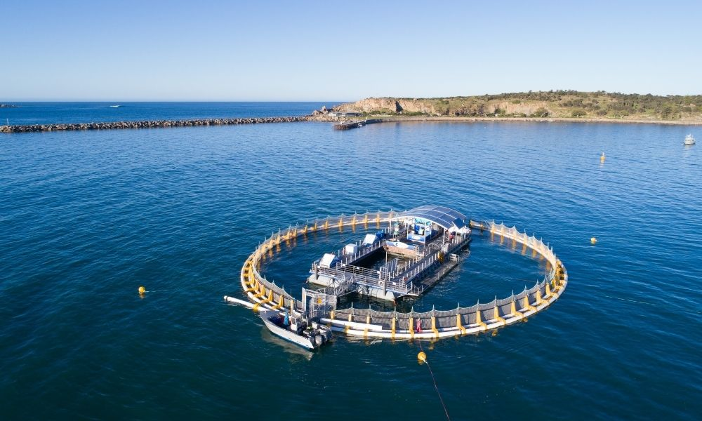 Victor Harbor Swim with the Tuna Experience + Seafood Tasting Platter