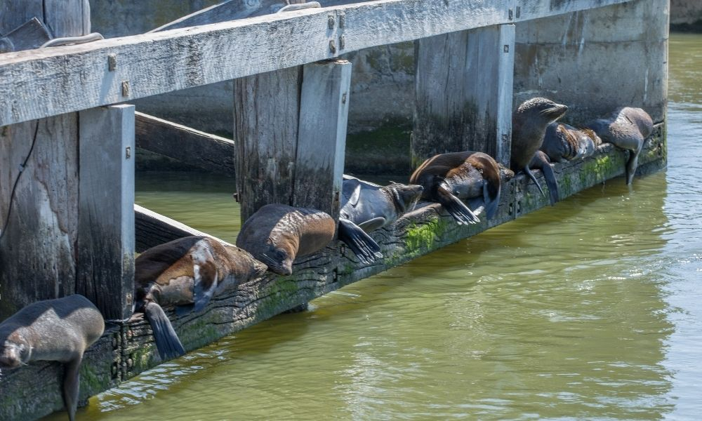 Coorong Half Day Cruise including Lunch