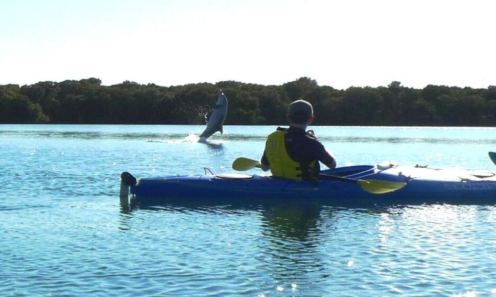 Adelaide Dolphin Kayaking Tour