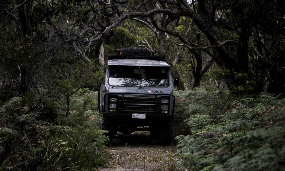 French Island and Phillip Island Sightseeing and Wildllife Tour including Lunch