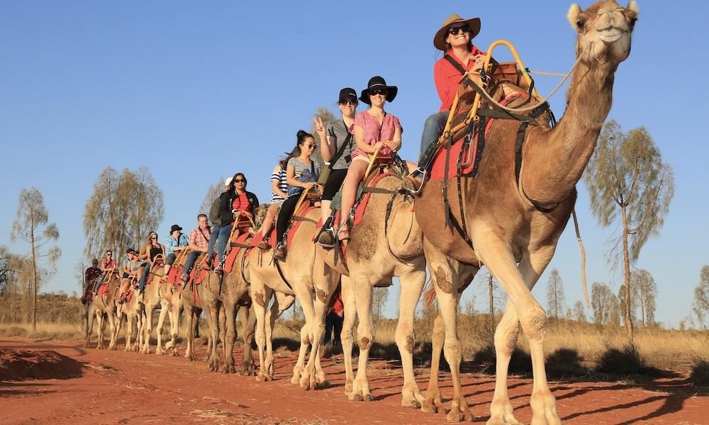 Uluru Sunrise Camel Ride Tour