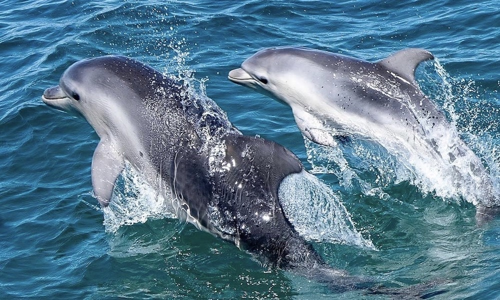 Dolphin and Seal Swim Tour in Queenscliff