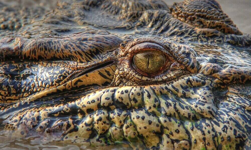 2 Day Kakadu and East Alligator River Tour