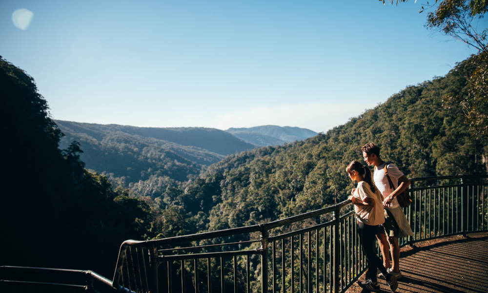 Natural Bridge and Springbrook Guided Afternoon Tour including Afternoon Tea